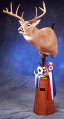 Whitetail deer taxidermy by Kentucky taxideremist John Griffith