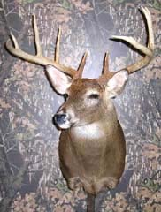 Indiana taxidermist Todd Buchanan