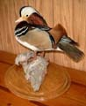 Hennings Wildlife Art Taxidermy Studio