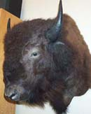 Wayne Smith taxidermist