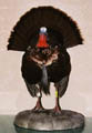 wild_turkey_taxidermy
