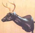 whitetail form sculpture