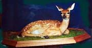 velma smith taxidermist