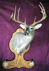 whhitetail deer mount